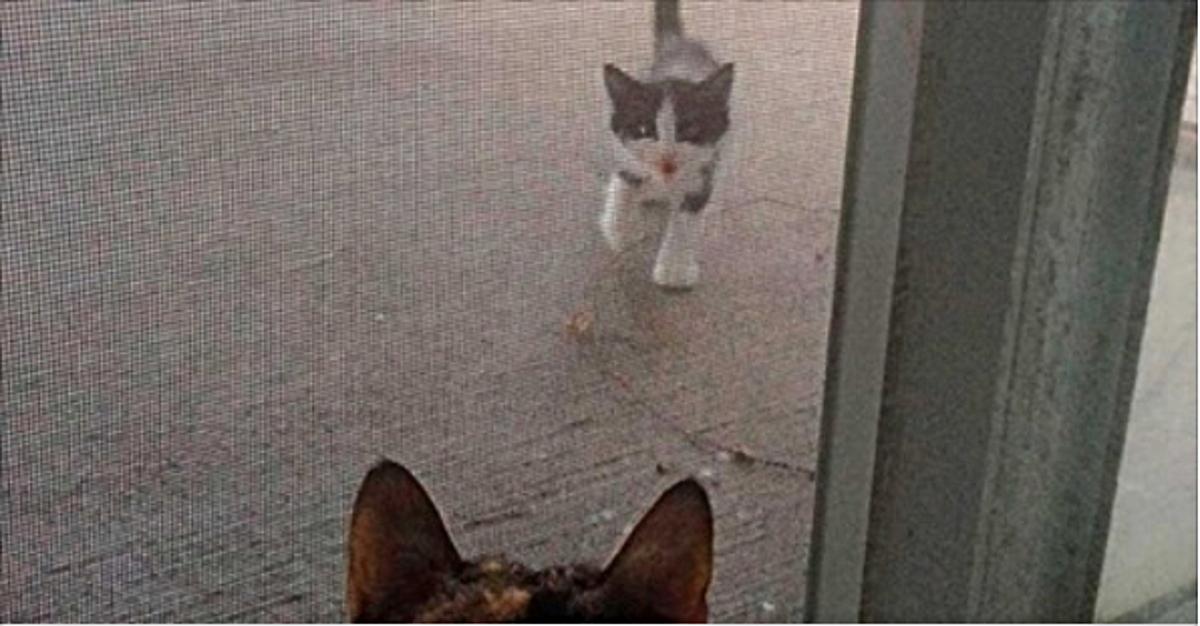 Уличный котенок пришел к ней…