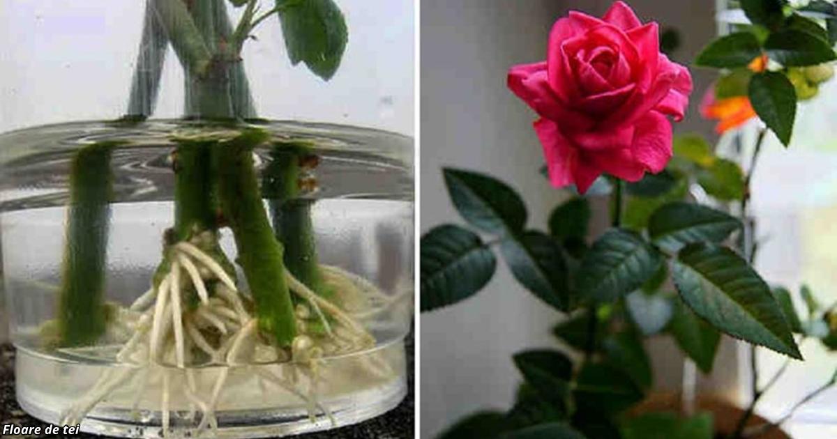 Как сделать так чтобы букет роз стоял дольше