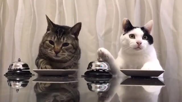 Коты звонят в звоночек