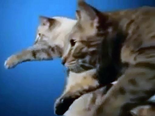 Студенты использовали кошек в юмористической рекламе Lada (ВИДЕО)