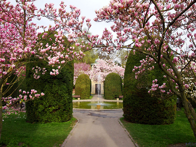 "Сад магнолий (Park ""die Wilhelma""), Stuttgart, Germany"