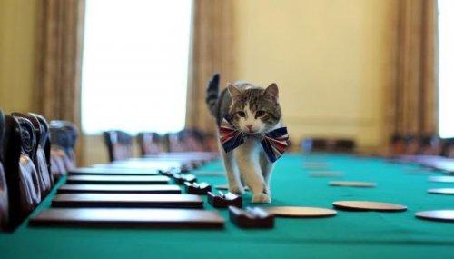 Кот Ларри — главный кот на Даунинг стрит, 10
