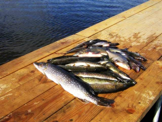 рыбалка на запорах