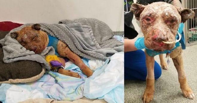 В заброшенном доме был найден пес со страшными ожогами. Кто-то облил его кислотой и бросил умирать…