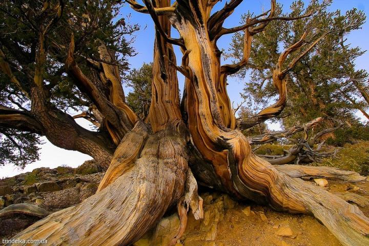 Деревья-скелеты 1001 Факт