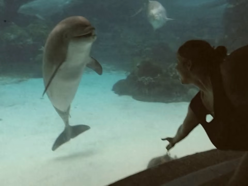 Забавная реакция дельфина на девушку-акробатку