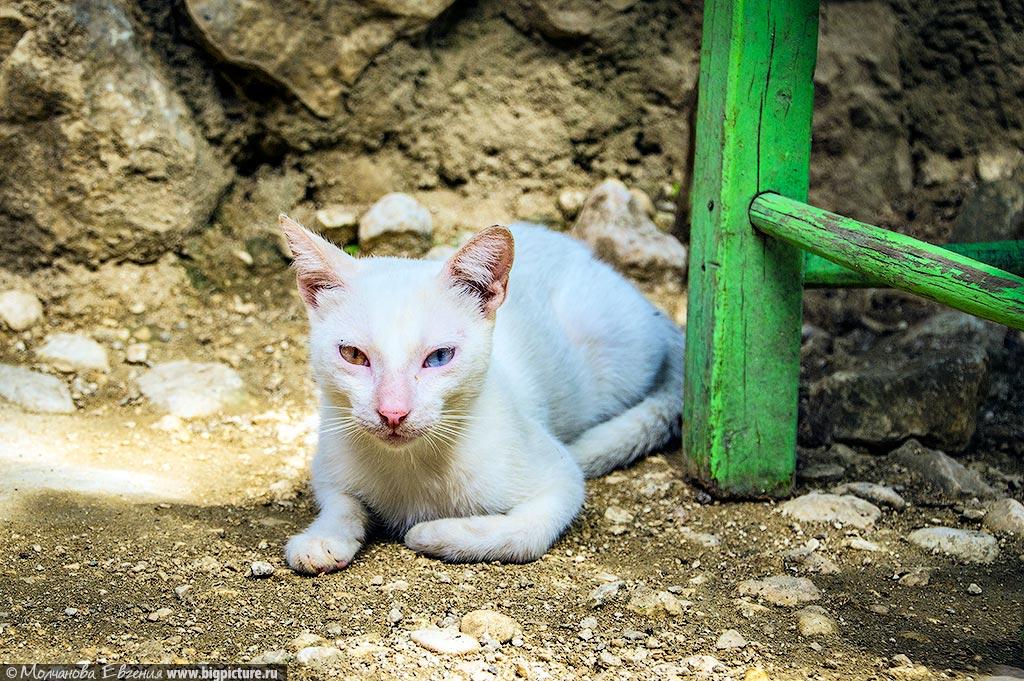 facts 6 75 фактов про Доминиканскую Республику