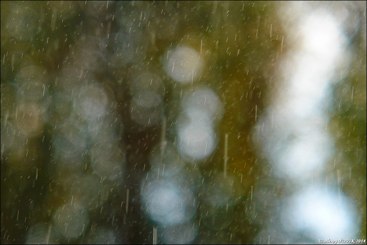 Фотопрогулки.   Летний дождь