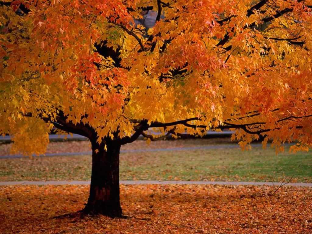 Осень дни стали короче