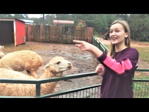 Веселая Ферма и Смешные Животные Угарные видео про животных на ферме