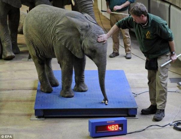 как взвесить слона если есть большая лодка