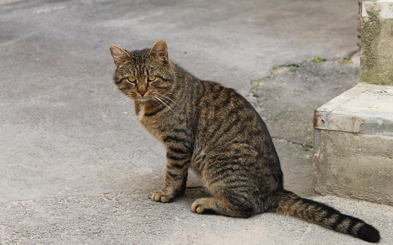 Истории, которые делают нас лучше: Серый кот