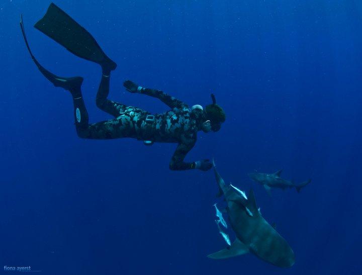 Это интересно: почему акулы боятся дельфинов?