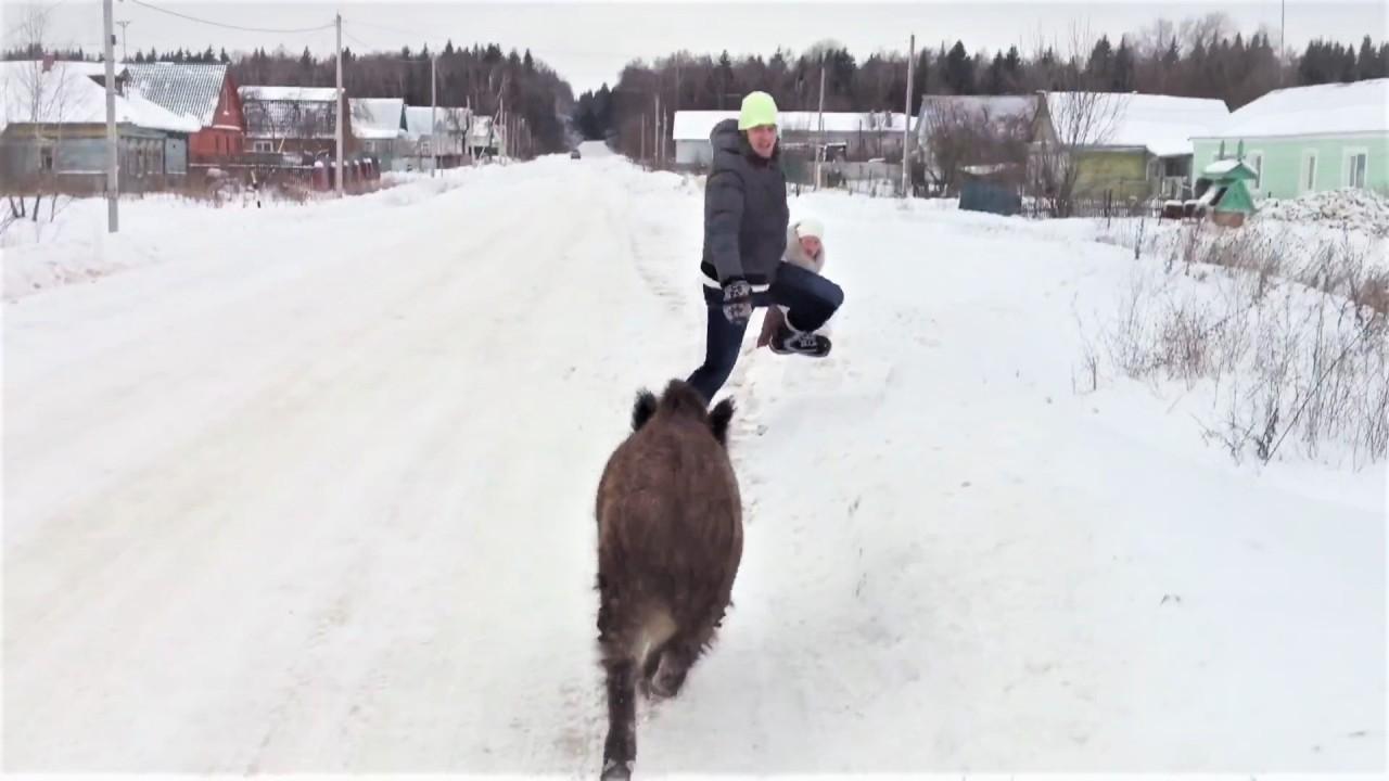 Прикольные и смешные животные января