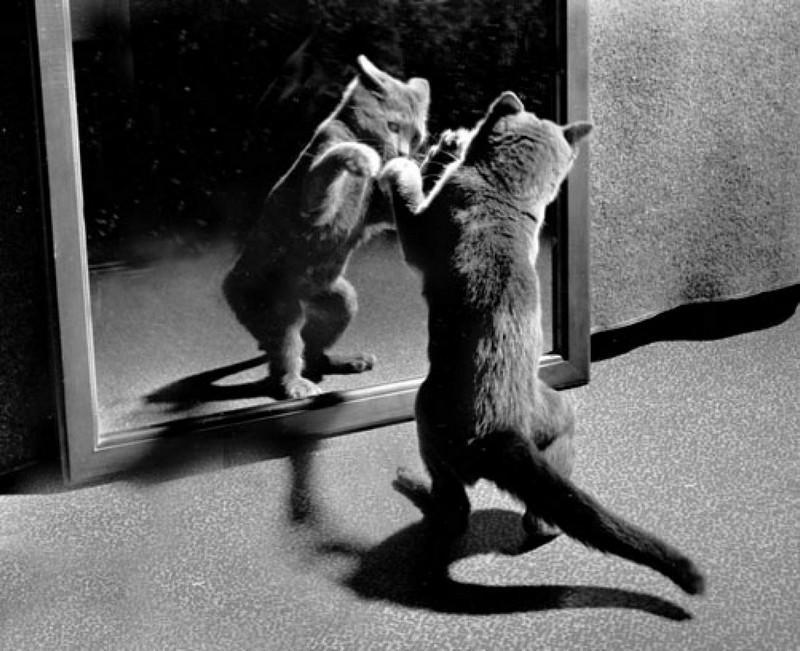 Уолтер Чандоха – человек, который 70 лет фотографировал кошек   3