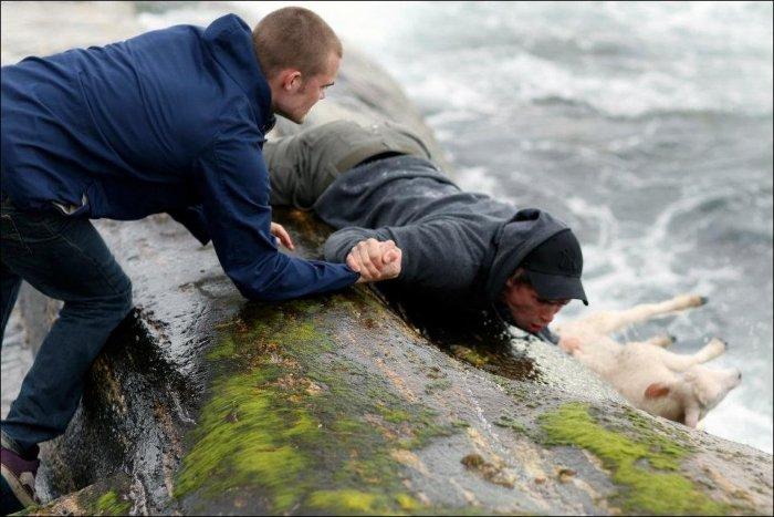 Маленький ягненок поскользнулся на камнях и упал в воду. К счастью, люди вовремя пришли на помощь.