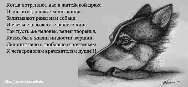 Зализывают раны нам собаки