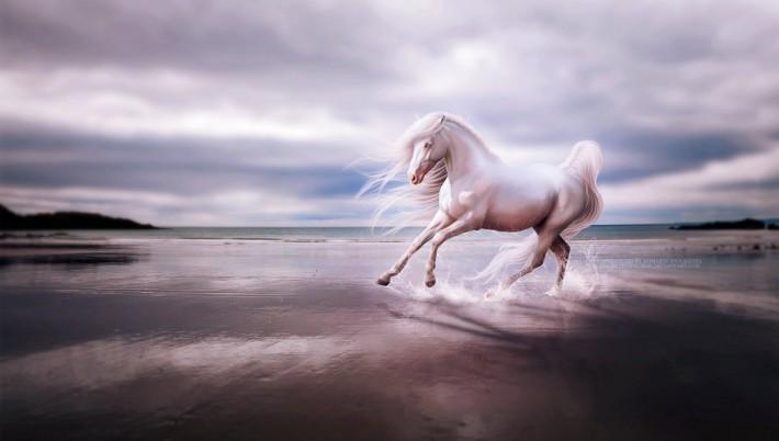 Фантастические лошади в работах Alimarije Zwaagstra (47 картин)