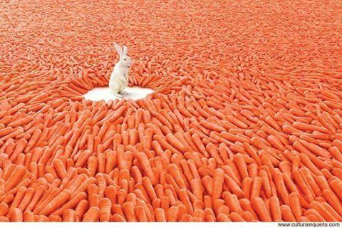 рай для кролика)