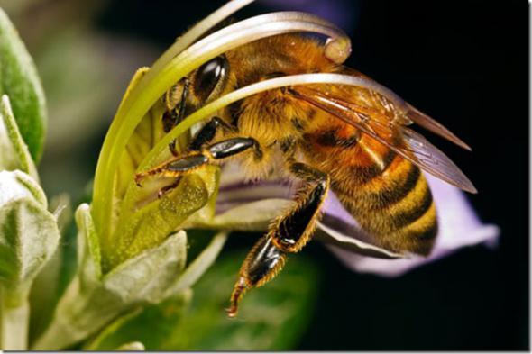Ученые предупреждают: без пчел человеку не выжить