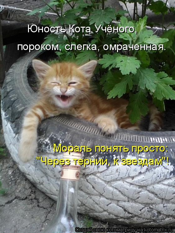 Котоматрица - Юность Кота Учёного,  пороком, слегка, омраченная. Мораль понять прост