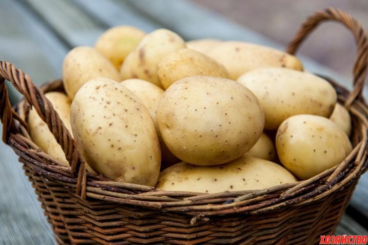Картофель – жизнь после всходов.jpg