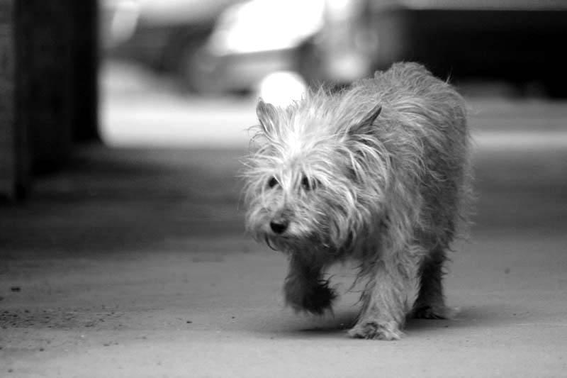 Большая любовь маленькой собачки