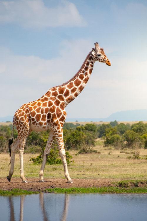 Красивое фото животных