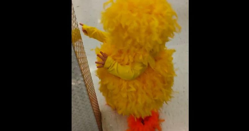 Она надела костюм цыпленка и пошла в магазин. Когда она поворачивается к камере, остаться равнодушным уже невозможно!