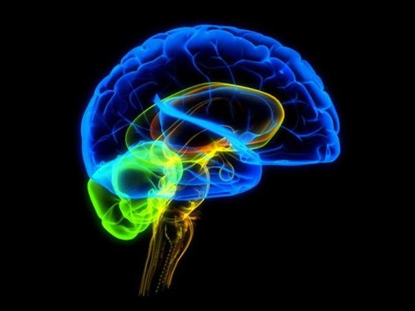 Кратко о работе головного мозга