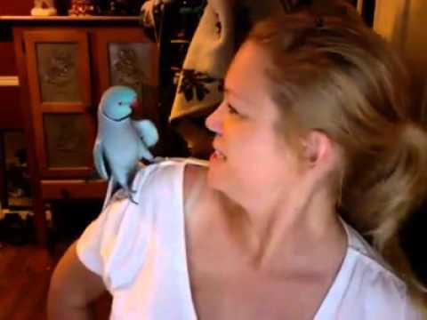 Попугай играет с хозяйкой в «ку-ку» и смеется. Удивительная птичка!