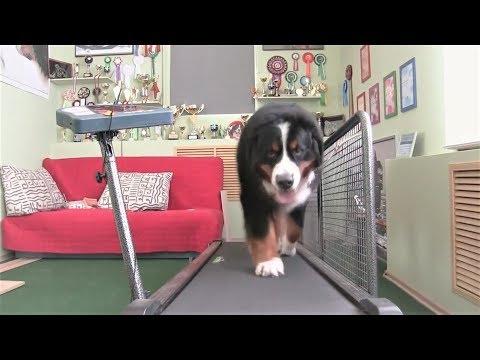 Приколы с животными Приколы с кошками и собаками #1 Декабрь 2017  Подборка смешных  интересных видео
