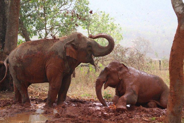 Дом престарелых для слонов-лесорубов в Мьянме