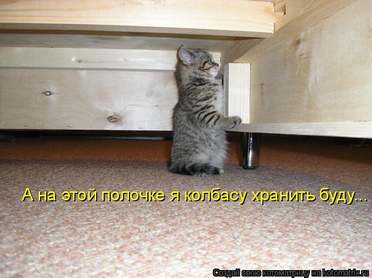 Котоматрица - А на этой полочке я колбасу хранить буду...