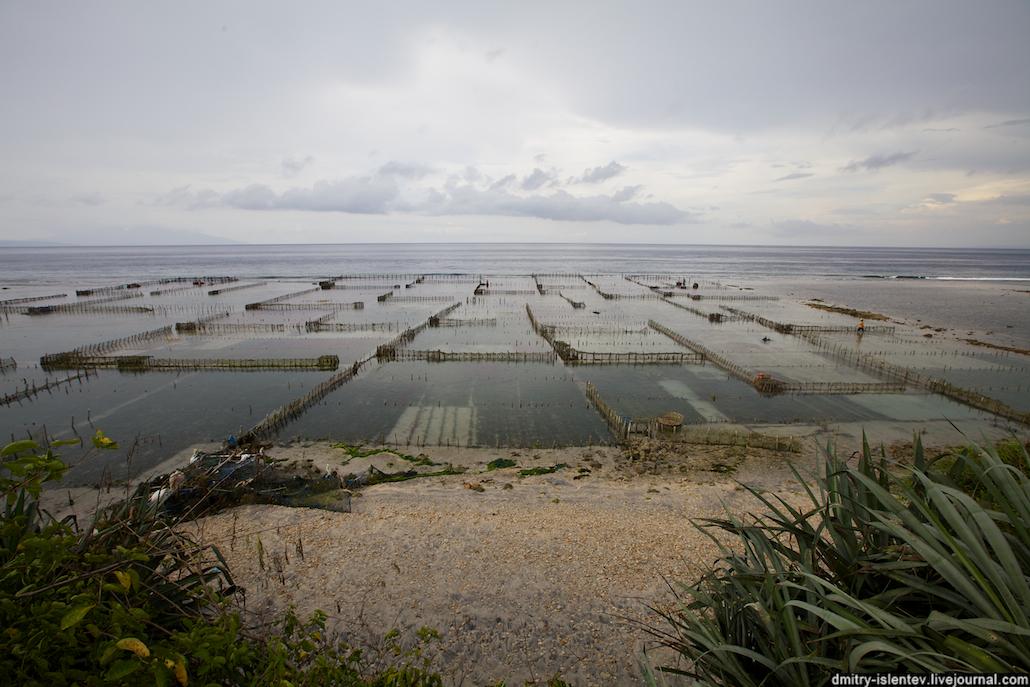 Выращивания водорослей 37