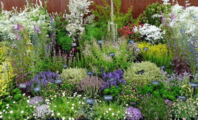 Садик пряных трав – ароматная грядка на участке
