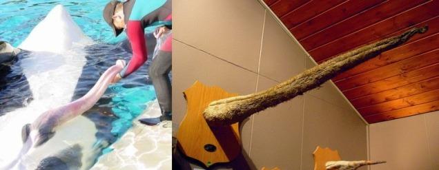 Половой член кита фото фото 404-656