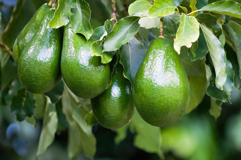 Этот экзотический плод улучшает память и уменьшает риск сердечно-сосудистых заболеваний. Но особенно он полезен для женщин
