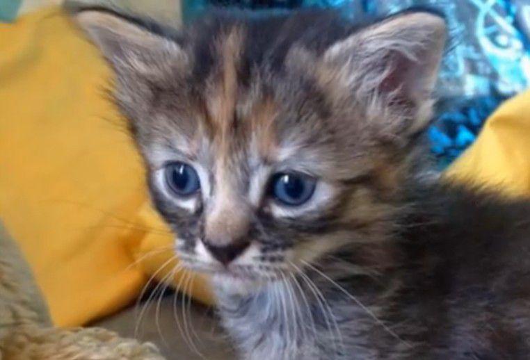 Cамый грустный котенок в мире животные, котенок, грусть