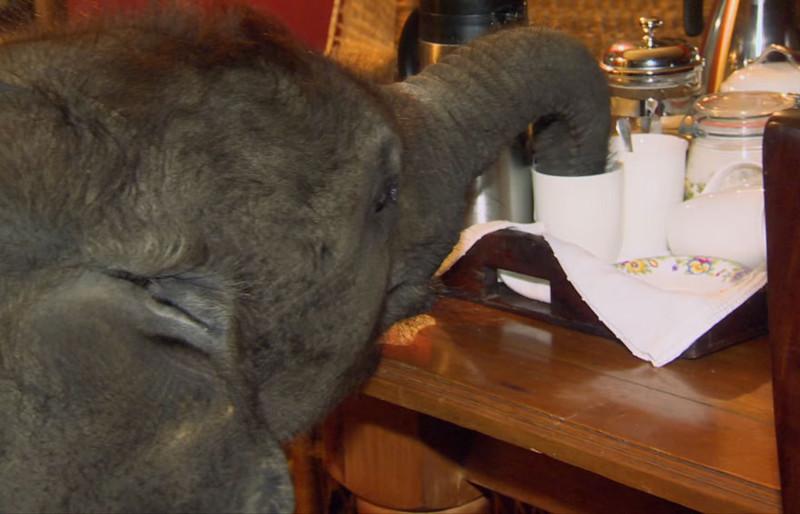 Ее любопытство всегда побеждает, и Мойо продолжает свои проделки в доме животные, слоненок