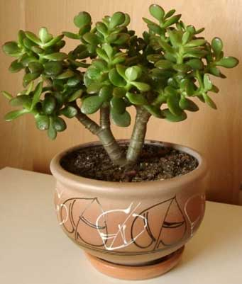 plants0115-4.jpg