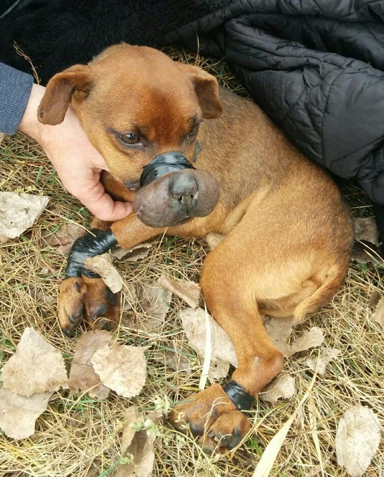 Возмездие извергу, который связал собаку изолентой и выбросил умирать