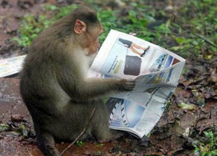 Любознательная обезьянка.