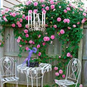 http://idealsad.com/wp-content/uploads/2013/09/foto-zaborov-s-cvetami6-300x300.jpg