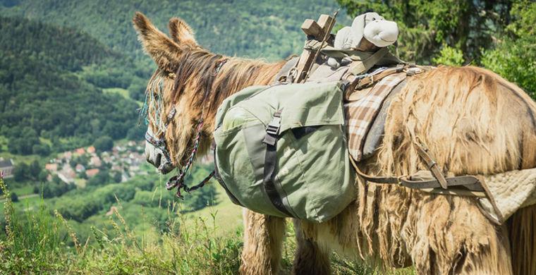 Голландская пара отправилась в путешествие с ослом Игорем