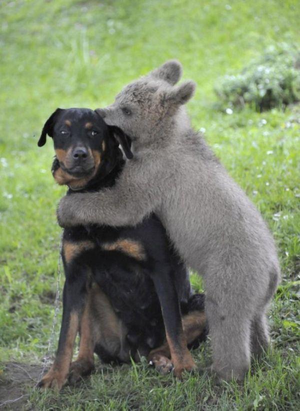 Они хотят выглядеть устрашающе  животные, позитив