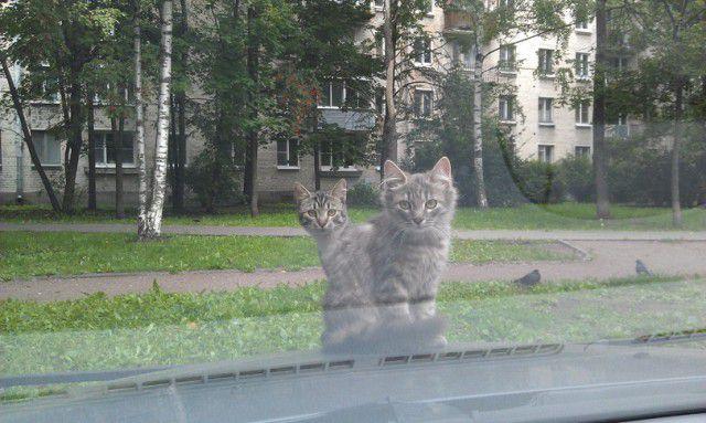Хозяева двора) кошки, двор, хозяева