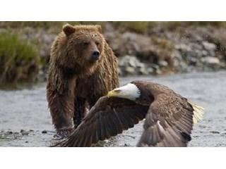 Ментальный капкан. Россия и (или) США?