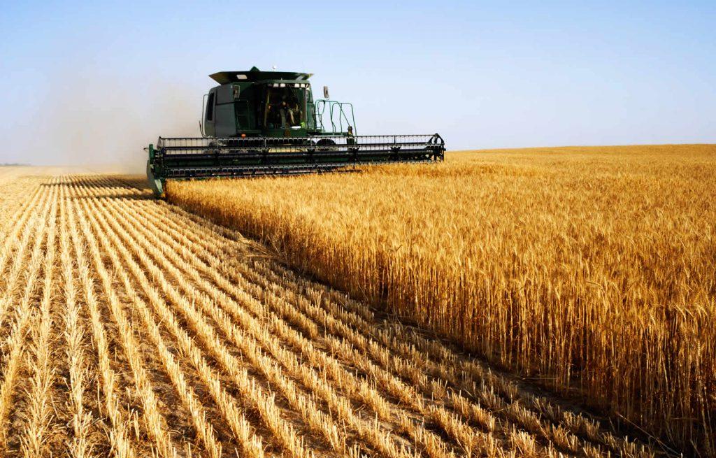 На зависть всем: Российская агропромышленность заинтересовала Венгрию