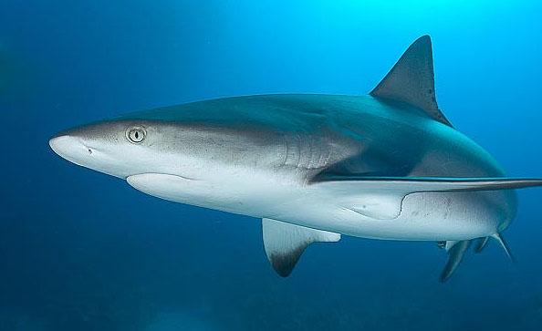 Посетители Калининградского зоопарка довели рифовую акулу до стресса
